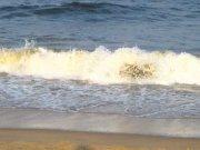 Chennai beach 2889