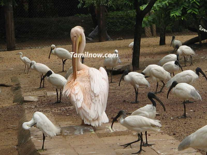 Beautiful birds in zoo at park