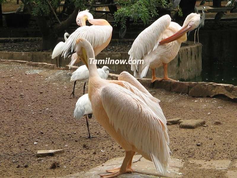 Birds at guindy national park chennai