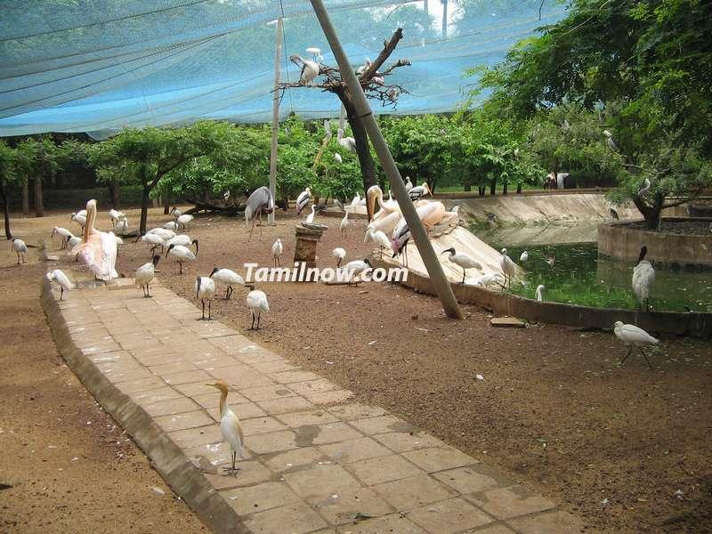 Chennai guindy national park