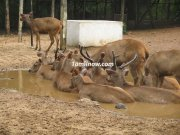 Deer at national park guindy
