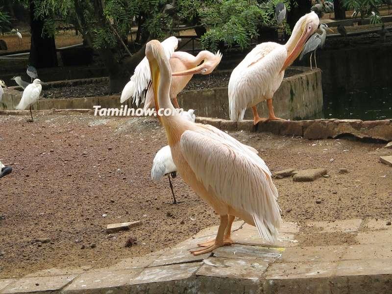 Guindy national park at chennai