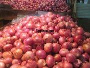 Big onions at koyambedu vegetable market 437