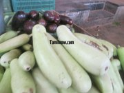Bottleguard for sale at koyambedu vegetable market 922