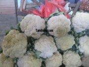 Cauliflower for sale at koyambedu vegetable market 654