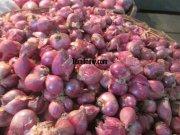Onions for sale at koyambedu vegetable market 371