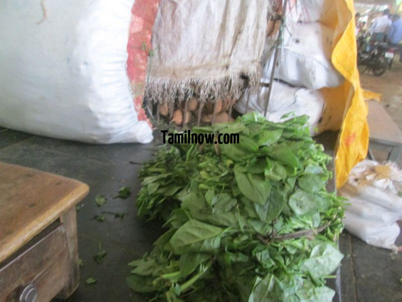 Palak for sale at koyambedu vegetable market 41