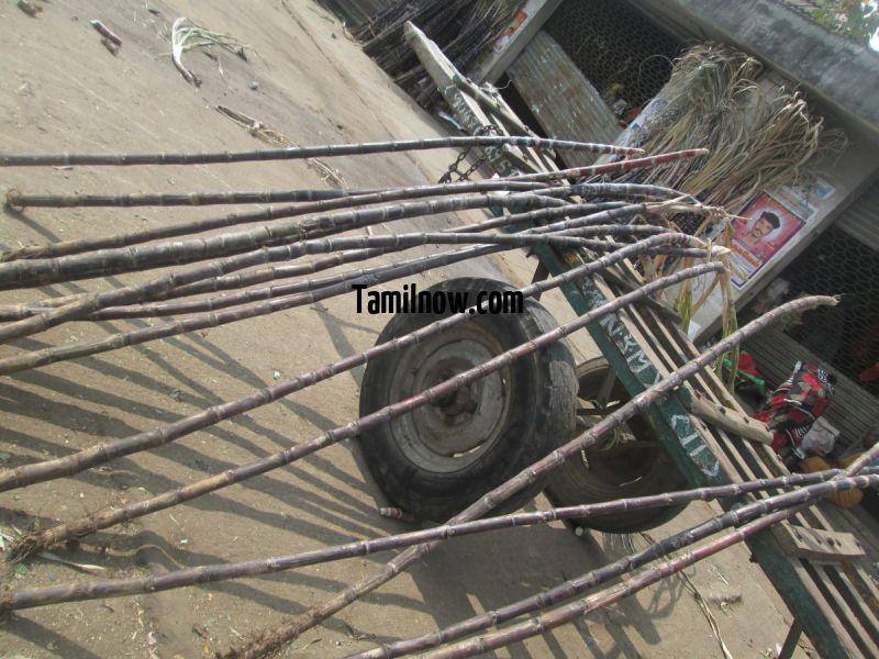 Sugarcane for sale at koyambedu market 649