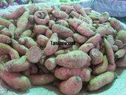 Sweet potato for sale at koyambedu vegetable market 394