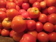 Tomato for sale at koyambedu vegetable market 94