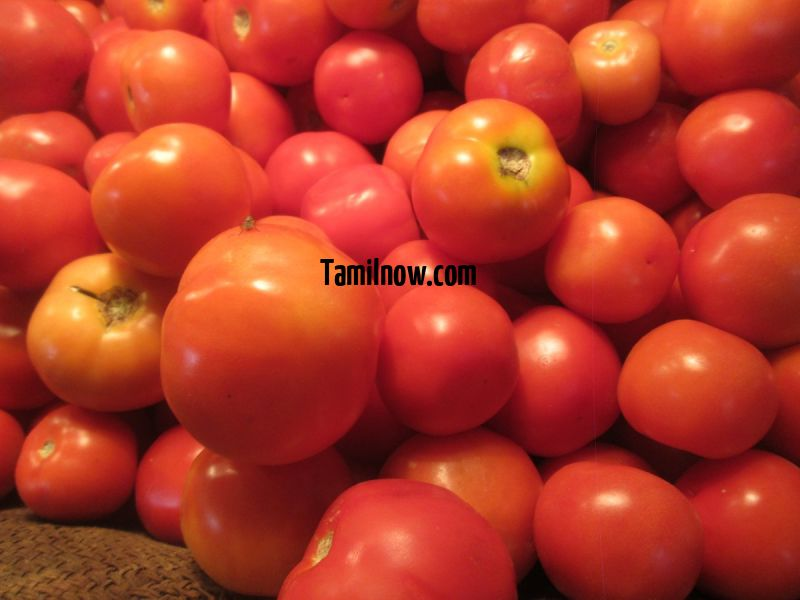 Tomato for sale at koyambedu vegetable market 953