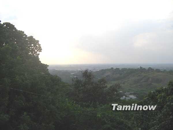 Chennai trees 4425