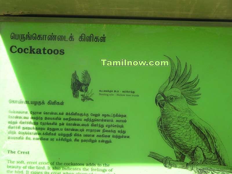 Cockatoos sign board