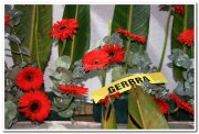 Red gerbra photo 1