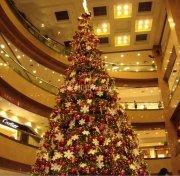 Huge xmas tree