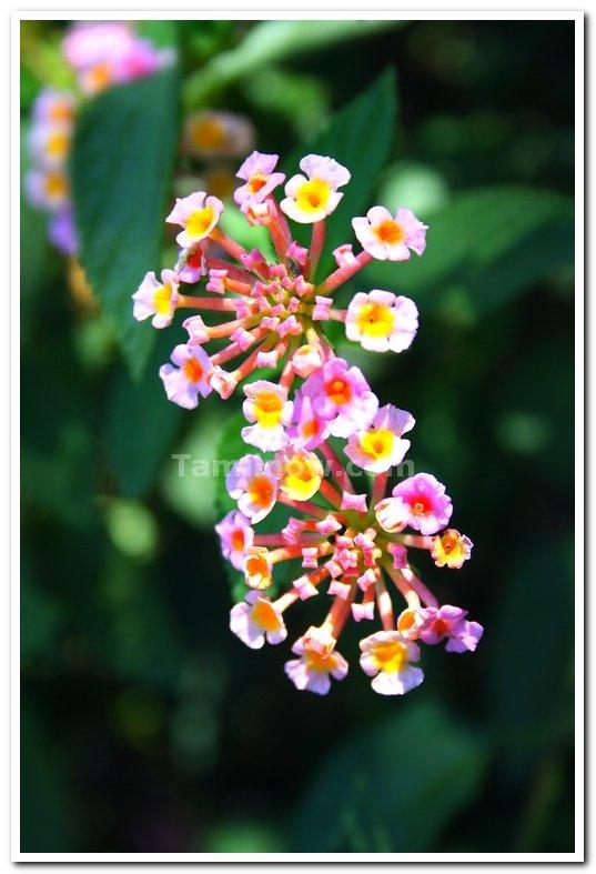 Beautiful flowers 3