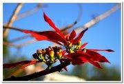 Beautiful flowers 5