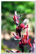 Flowers at yercaud 1
