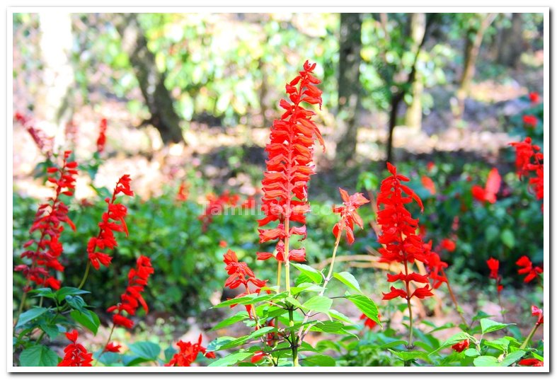 Flowers at yercaud 2