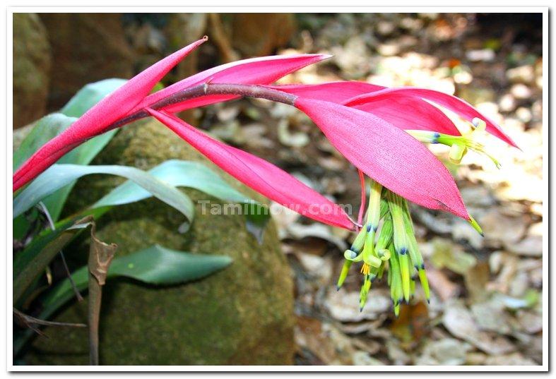 Flowers at yercaud 3