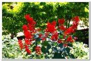 Flowers from yercaud 1