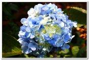 Flowers from yercaud 2