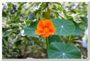Flowers from yercaud 3