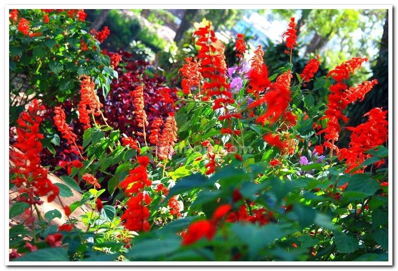 Flowers from yercaud 4