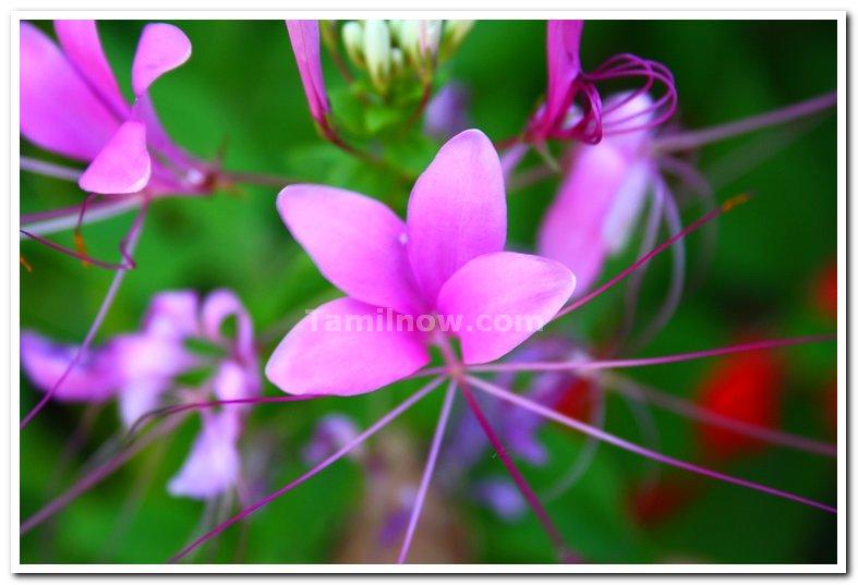 Flowers from yercaud 5