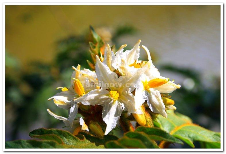 Yercaud flowers 1