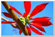 Yercaud flowers 2