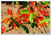 Yercaud flowers 4