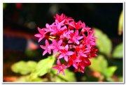 Yercaud flowers 5