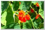Yercaud flowers 6