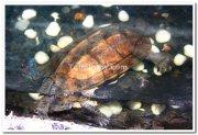 Aquarium mysore brindavan gardens 2