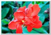 Flowers at mysore brindavan gardens 6