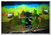 Vishweshwariah aquariam brindavan 3