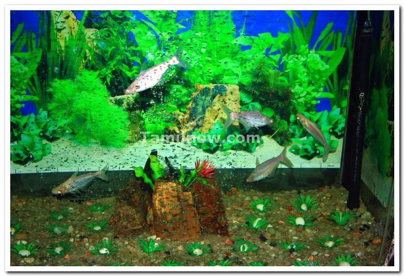 Vishweshwariah aquarium brindavan gardens 2