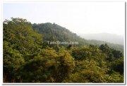 Thick forest near dudhsagar