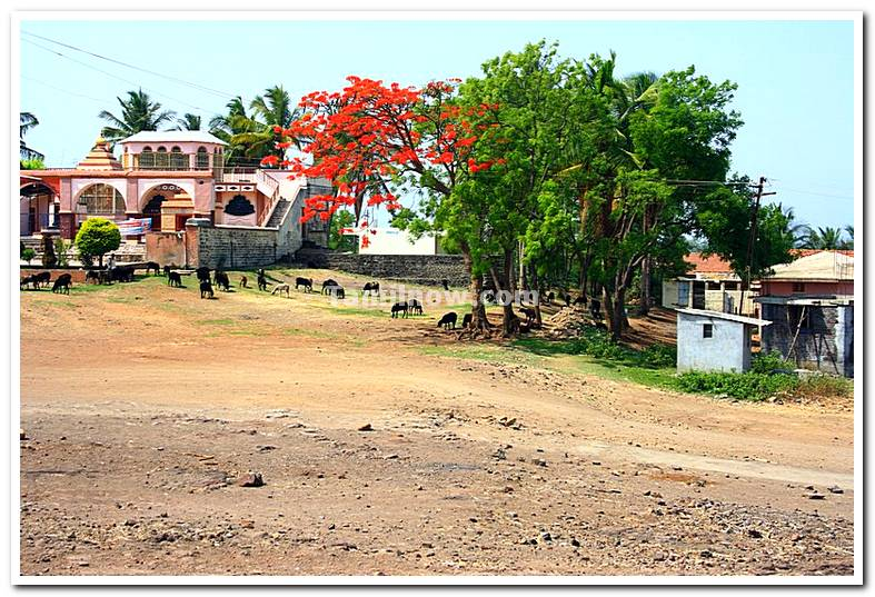 Akiwad in maharashtra photo 1