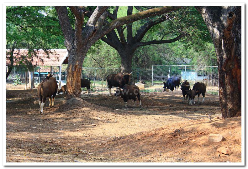 Mysore zoo animals 2