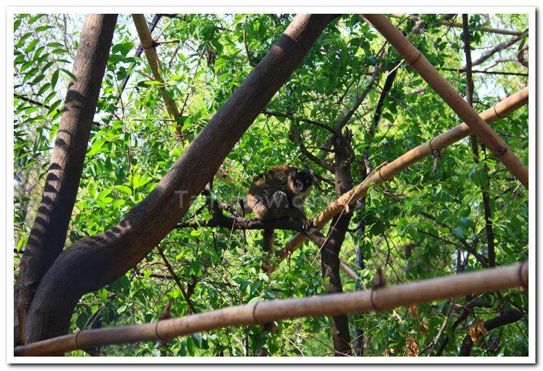 Mysore zoo animals 4