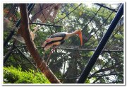 Painted strokes at mysore zoo 3