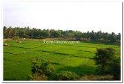 Paddy fields mysore