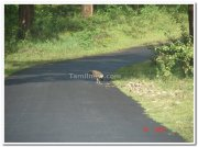 Nagarhole national park road