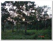 Nagarhole national park still
