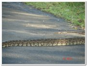 Snake in nagarhole national park