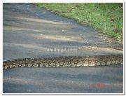 Snake in nagarhole national park