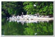 Painted stork at ranganathittu 1