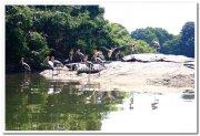Painted stork photos 3